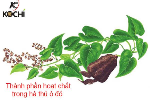 Thành phần hóa học của cây hà thủ ô