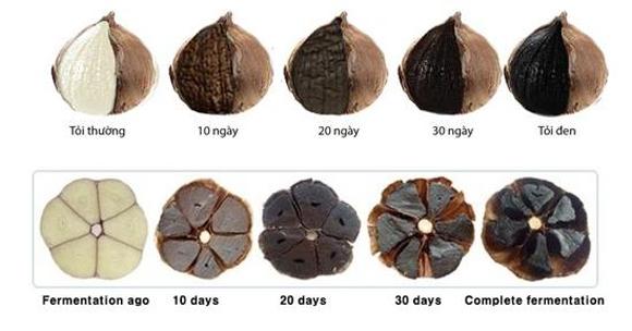 quá trình tạo ra tỏi đen