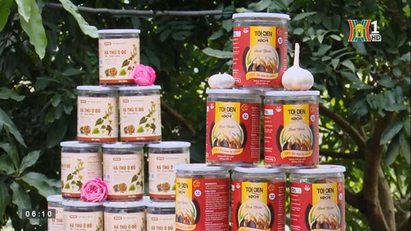 Sản phẩm tỏi đen Kochi và hà thủ ô đỏ chế Kochi
