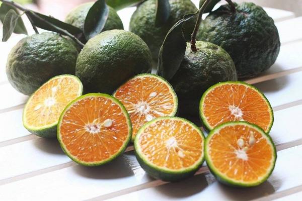 cam thực phẩm tăng cường hệ miễn dịch