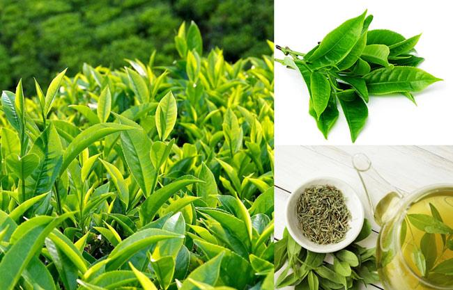 thảo dược tự nhiên trà xanh giúp đẹp da